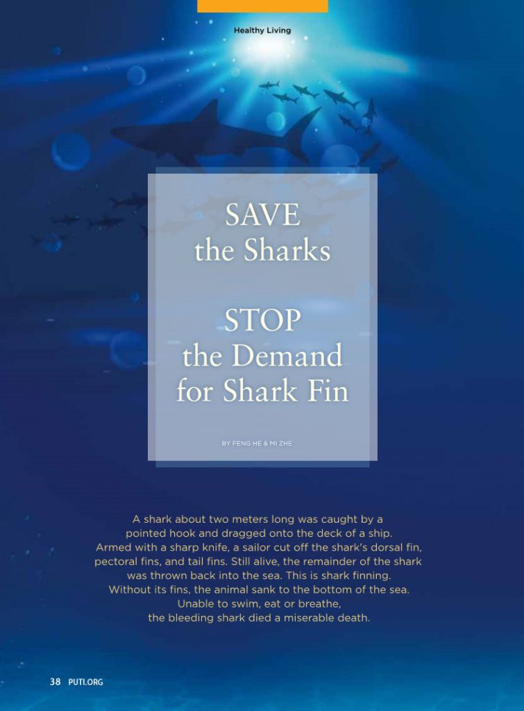 #17-Save the Sharks:Stop the Demand for Shark Fin